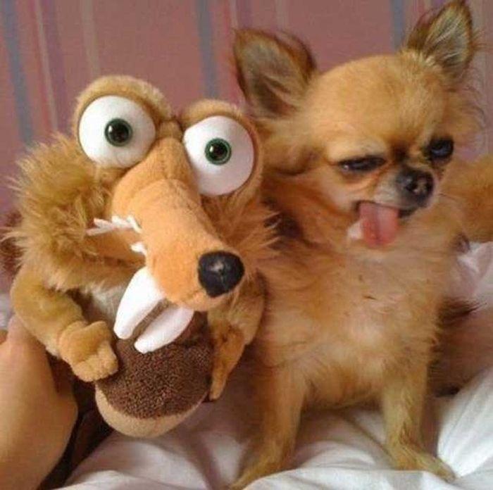 Эти забавные животные (52 фото)