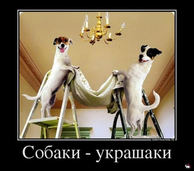 Собаки-Демотиваки