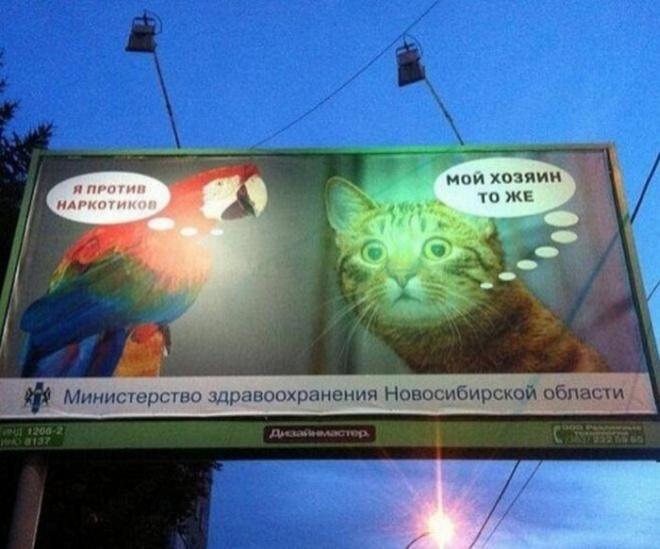Идиотизмы и маразмы 2013 (50 фото)